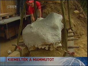 A mamut maradványait körbegipszelték a szállítás előtt