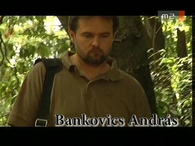 Bankovics András