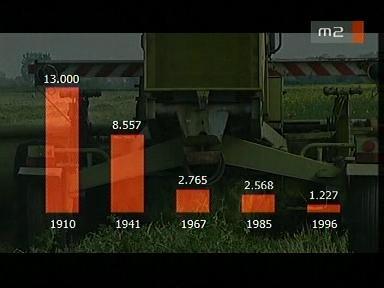[A magyarországi túzokok száma a 20. század során]