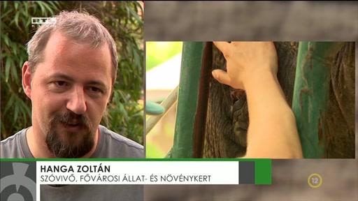 Hanga Zoltán, szóvovő, Fővárosi Állat- és Növénykert